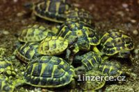 Suchozemské želvy a terária
