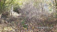 Likvidace náletů, keřů, stromů