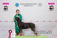 Švajčiarsky salašnícky pes