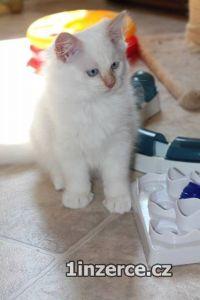 Koťata s PP