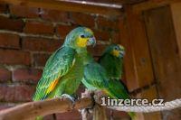 Prodej ptactva