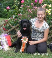 Labrador retriever, s PP