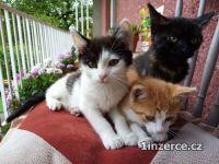Koťata k odběru
