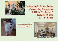 Umísťovací výstava koček na Smíc