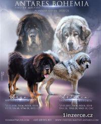 Rezervace Tibetské dogy s PP