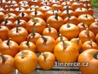 Dýně Halloween a okrasné dýně